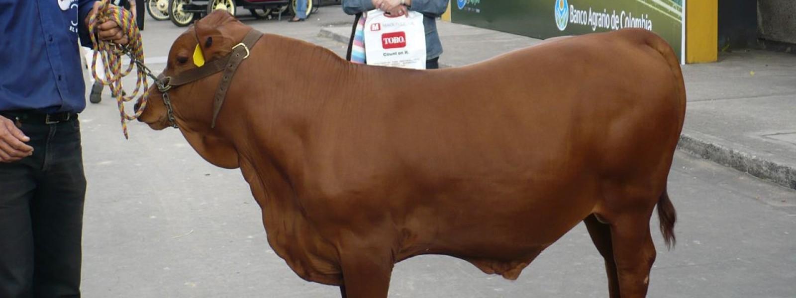 Genética Animal de Colombia
